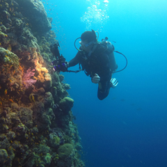 Cinematographer Justin Smith captures a coral wall in the Red Sea