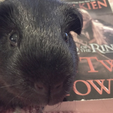 Frodo the guinea pig sitting on a book