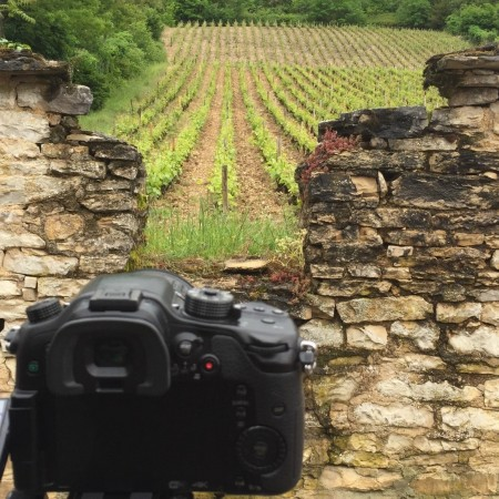 Camera and vineyard wall