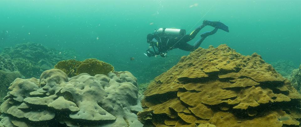 Varadero Reef Colombia